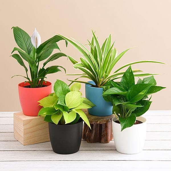 Nursery Plants